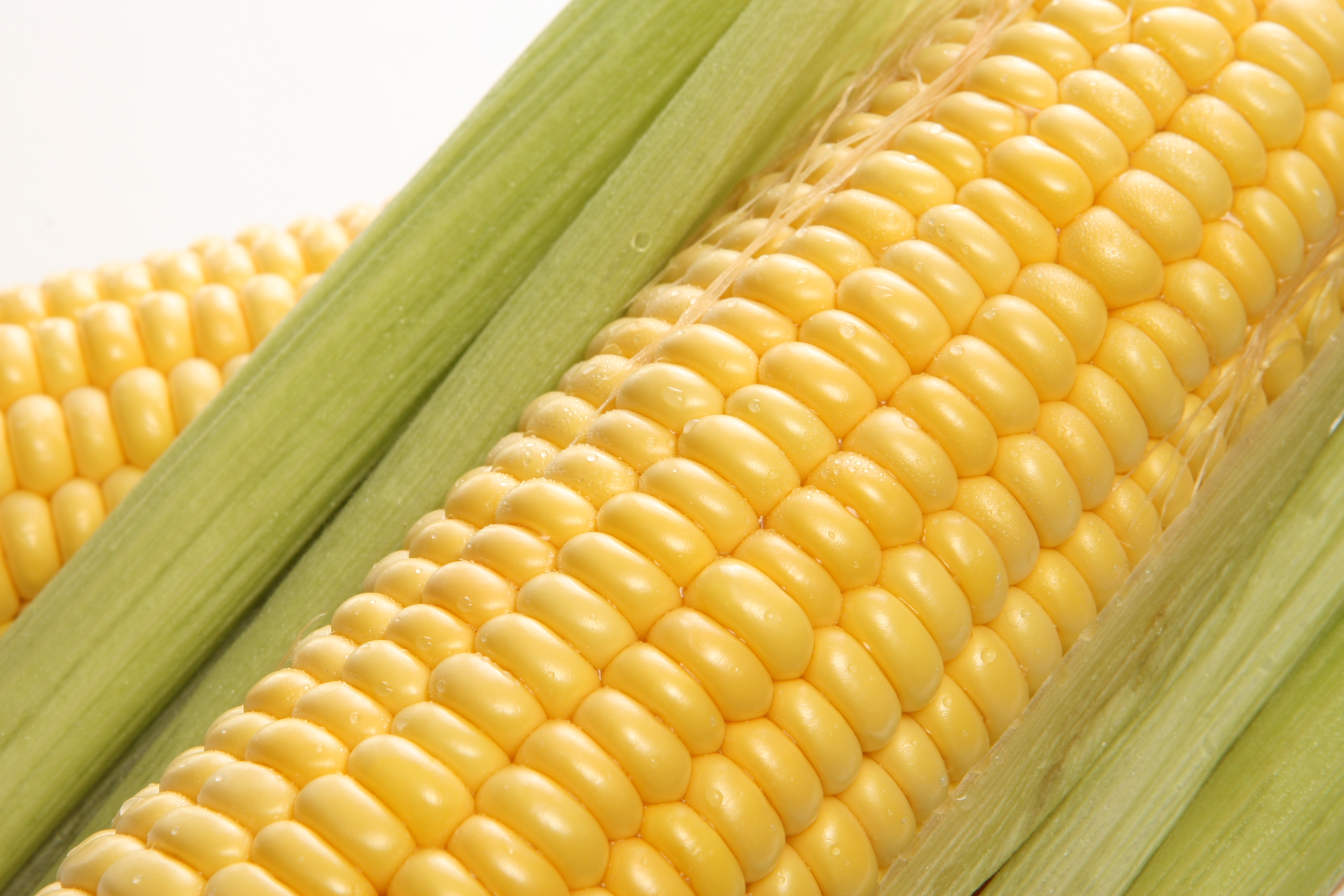 maize buddhist personals Guide to weekend getaways from karu (maize) one can see corns a buddhist pilgrimage for happiness by roli jain.
