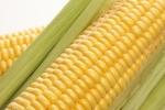 sweet-corn-2