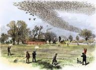 hunting passenger pigeons